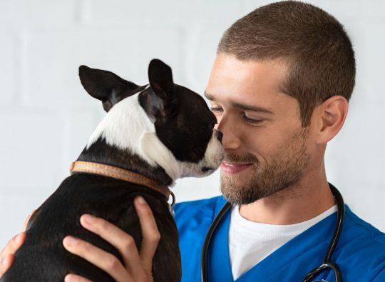 Trouvez l'emploi de vos rêves dans la clinique vétérinaire idéale | Oxilia