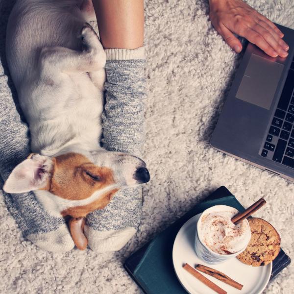 How do you regain control over your veterinary career? | Oxilia