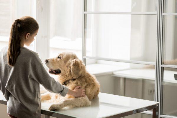 Combien coûte un poste non pourvu dans votre clinique vétérinaire? | Oxilia